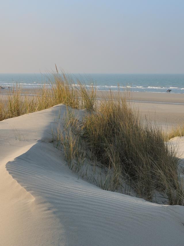 Dune Blanche